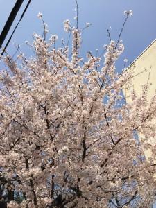写真 2015-03-31 10 47 30