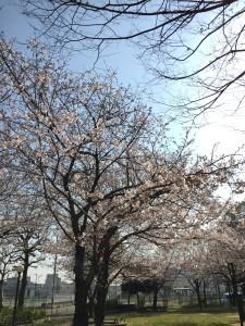 写真 2015-03-30 14 58 20
